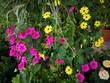 farbenfrohe Sommerblumen