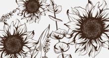 Sunflowers Line Art Vector. Ha...
