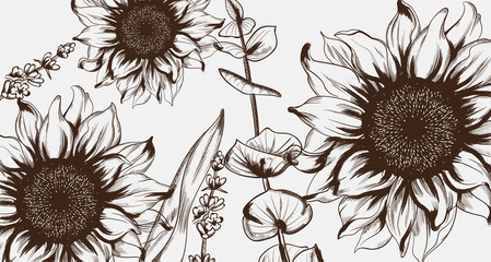 Fototapeta Słoneczniki Sunflowers line art Vector. Hand drawn decor texture vintage styles