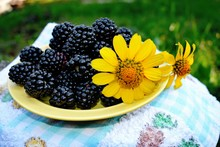 The Blackberry Is An Edible Fruit Produced By Many Species In The Genus Rubus In The Family Rosaceae