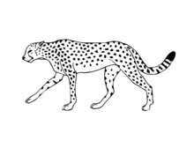 Vector Black Line Hand Drawn Walking Cheetah Isolated On White Background