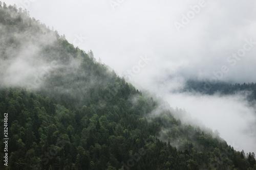 Poster de jardin Kaki Berg und Wald in Nebel