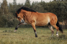 Red Horse Playing On Grass Field