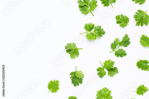 Fresh coriander leaves on white background. Tablou Canvas