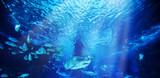 Fototapeta Zwierzęta - The great white shark in the big blue