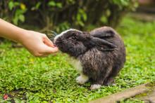 Hands Feed The Rabbit. Cosmeti...