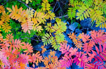Panel Szklany Podświetlane Natura colorful leaves background