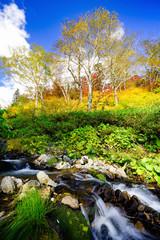 Fototapeta Drzewa autumn in the wild park
