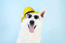 Swiss Shepherd Dog With Sungla...