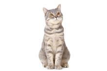 Beautiful Cat Sitting On White Background