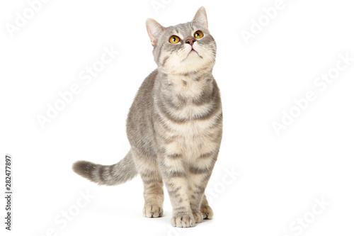 Fototapeta Beautiful cat on white background