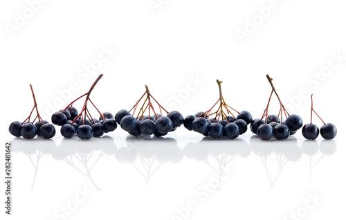 Obraz na plátně  Fresh Aronia Berries
