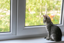 A Young Cat Sits On A Window Sill By The Window And Looks Out Into The Street