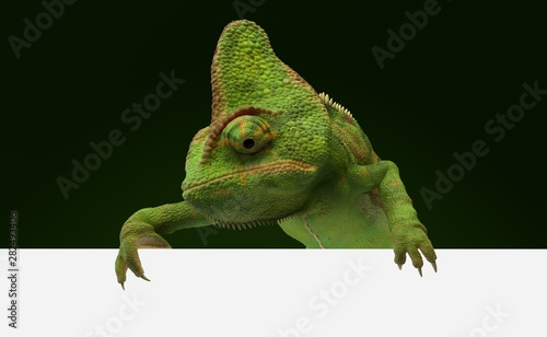 Chameleon behind blank wall Poster Mural XXL
