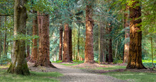Long Trees Walk In New Forest ...