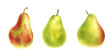 Watercolor Drawing Green Pears