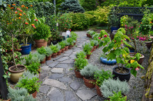 Herbal Potted Plant Garden Wit...