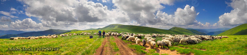 Spoed Fotobehang Schapen A flock of sheep on a mountain