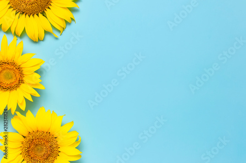 Fotografia Beautiful fresh sunflowers on blue background