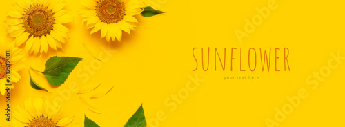 Poster de jardin Tournesol Beautiful fresh sunflowers on bright yellow background. Flat lay, top view, copy space. Autumn or summer Concept, harvest time, agriculture. Sunflower natural background. Flower card
