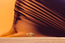 Dune 45, A Massive Red Sand Du...