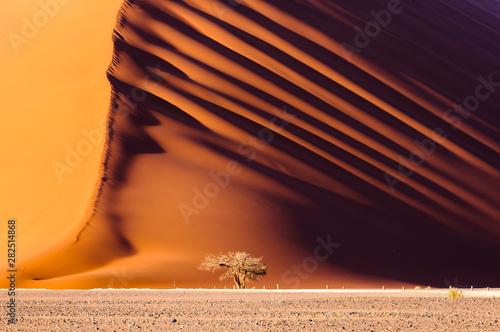 Photo Dune 45, a massive red sand dune in the Namib Desert, Sossusvlei, Namibia