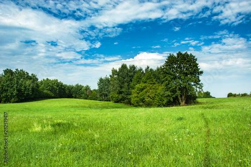 Cuadros en Lienzo Green meadow and shrubbery