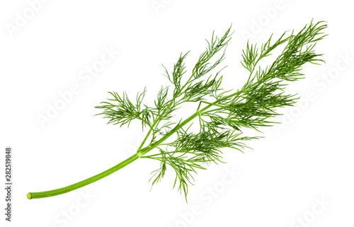 Photo twig of fresh green dill herb isolated on white