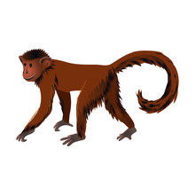 Squirrel Monkey Jungle Animal ...