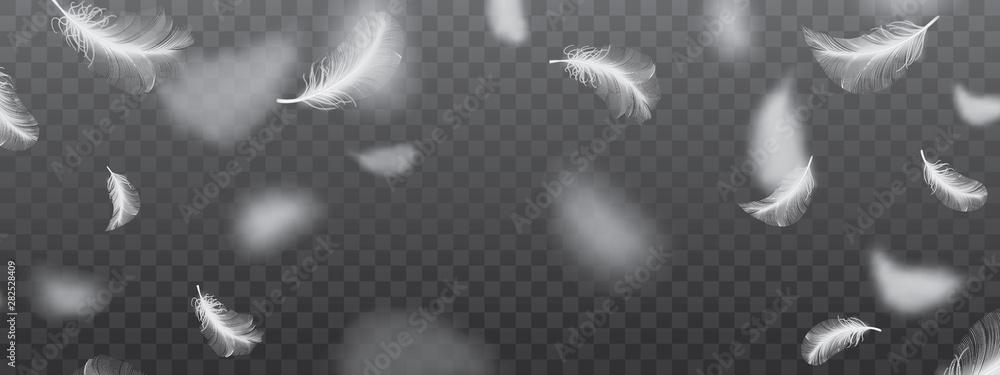 Fototapety, obrazy: White Flying Bird Feathers Pattern on Dark Background
