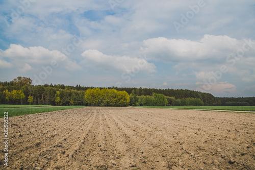 Fototapeta ziemia uprawna podorana pod ziemniaki obraz