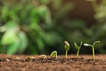 Little Green Seedlings Growing...