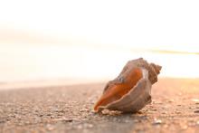 Sunlit Sandy Beach With Beauti...