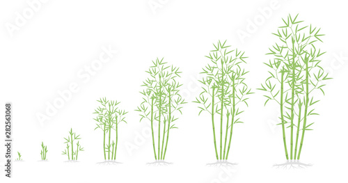Photographie Bamboo bush growth stages