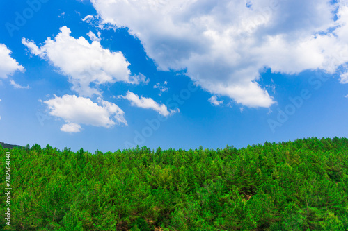 Photo Stands Green Natural park with forest and blue sky. Spring season