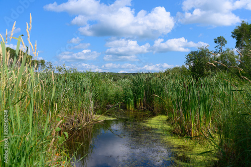lush wetland in a forest setting Fotobehang