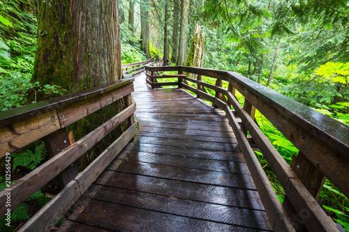 Boardwalk in the forest