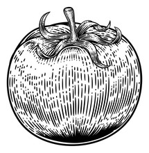 A Tomato Food Graphic. Original Illustration In A Vintage Engraving Woodcut Etching Style.