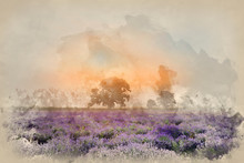Digital Watercolour Painting Of Beautiful Dramatic Misty Sunrise Landscape Over Lavender Field In English Countryside