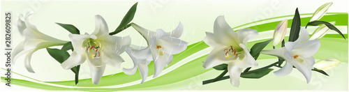white large lily flowers stripe on light background Billede på lærred