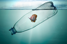 Plastic Bottle With Fish, Poll...