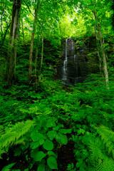 Obraz na Szkle Wodospad stream in forest