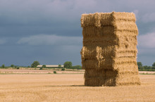 Hay Stack Straw Bales In A Recently Harvested Field