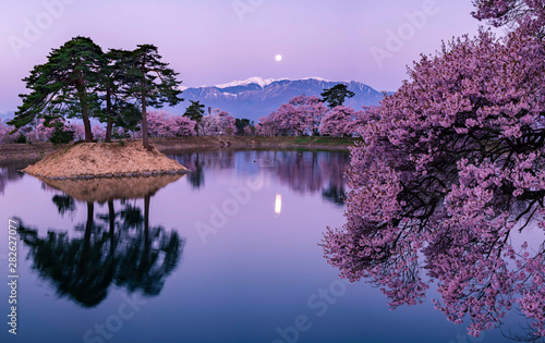 Photo sur Toile Aubergine cherry blossom with full moon