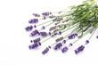 Leinwandbild Motiv Lavender flowers on a white background.