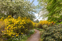 Narrow Path Through A Kaleidoscope Of Flowering Shrubs And Trees In A Park At Springtime.