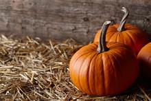 Beautiful Halloween Pumpkins In Dark Old Barn