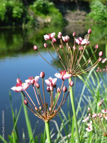 Fototapeta flowers in field