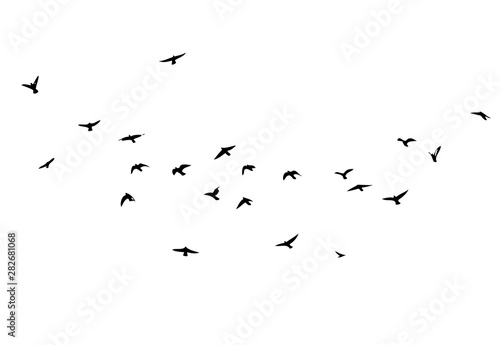 Photo  A flock of flying birds. Vector illustration