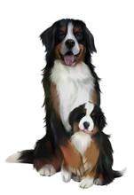 Bernese Mountain Dogs. Waterco...